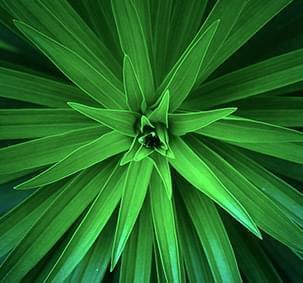 jQuery Green Slider